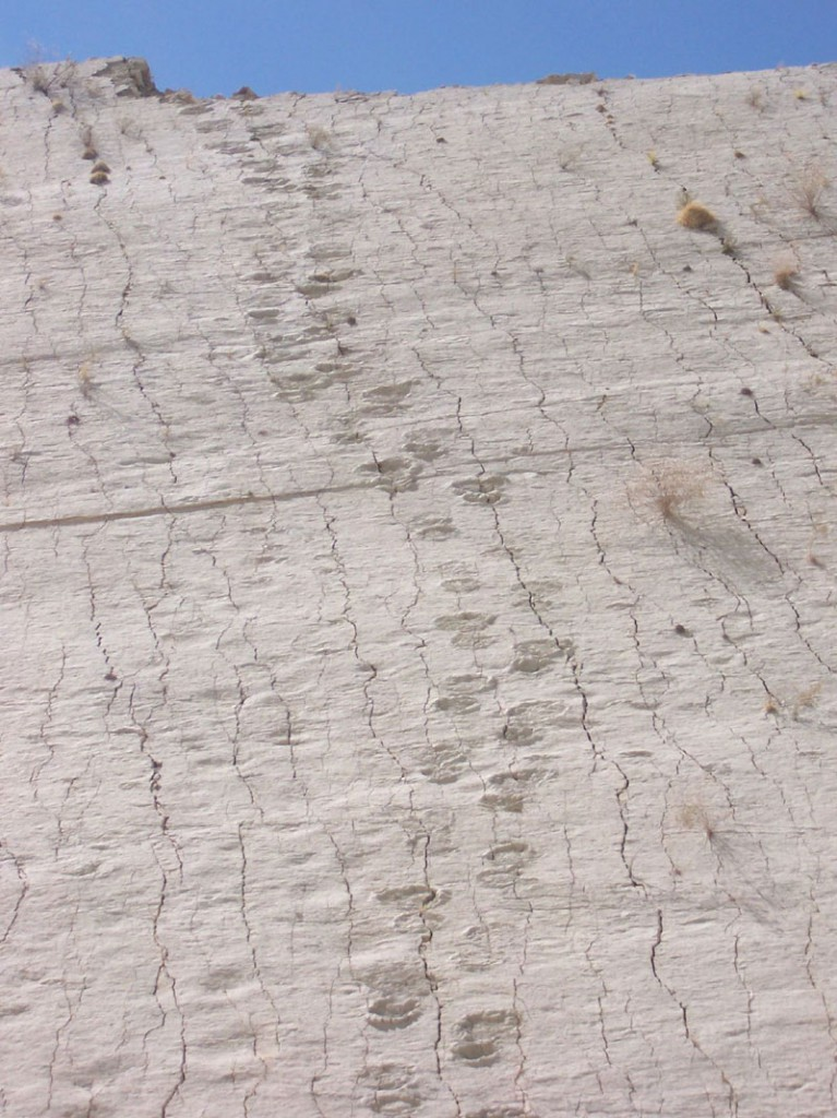 cal-orko-wall-of-dinosaur-footprints-sucre-bolivia-7
