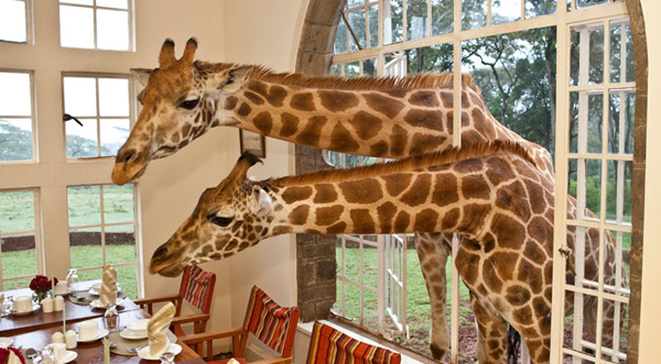 giraffe-manor-lodge-kenya-7