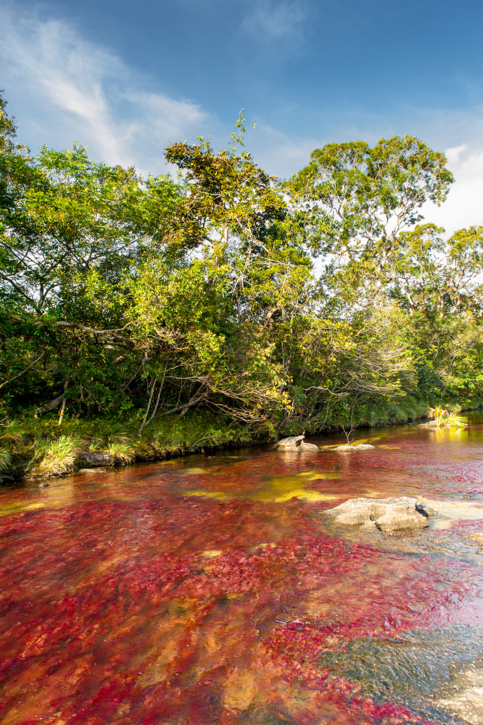 cano-cristales-river-of-five-colors-colombia-woe2-690x1036