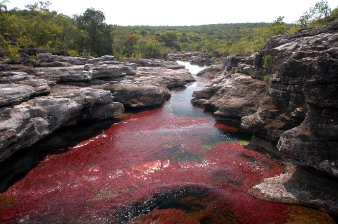cano-cristales-river-of-five-colors-colombia-woe3-690x458