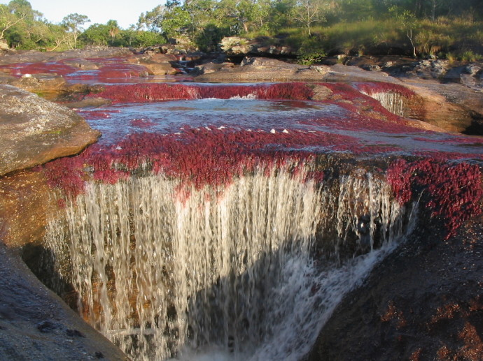cano-cristales-river-of-five-colors-colombia-woe5-690x517
