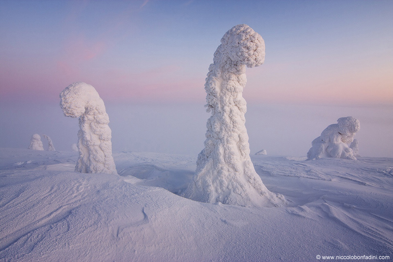 snow-covered-trees-finnish-lapland-apod-by-niccolo-bonfadini