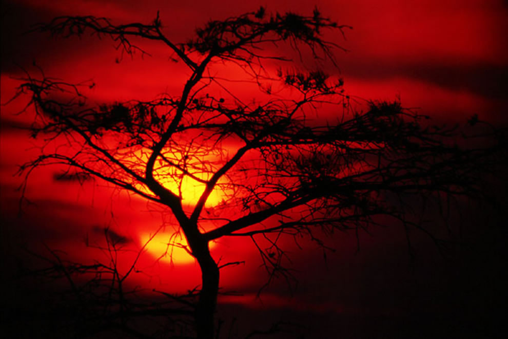 Bloody-sunset-at-Everglades-Florida