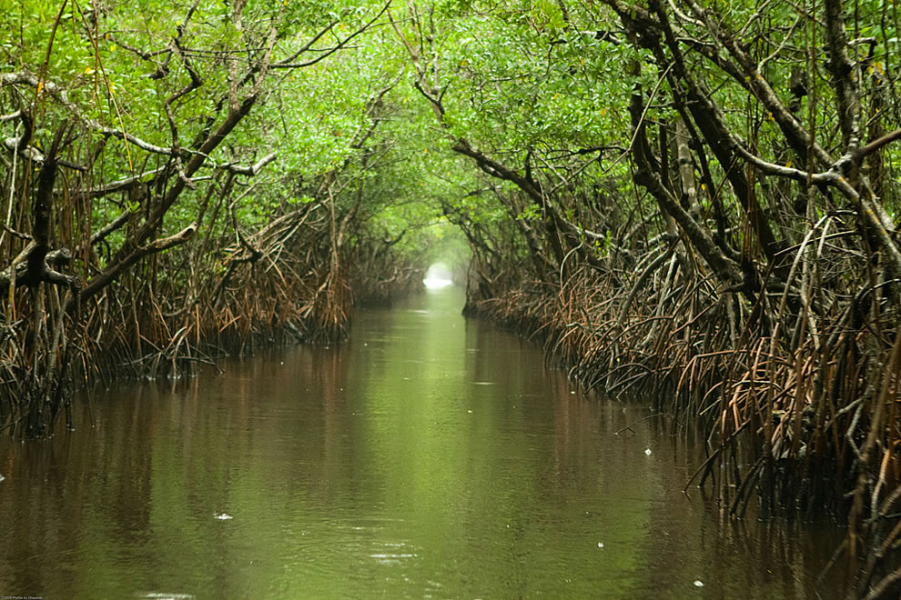 Everglades-water-way-on-a-rainy-afternoon
