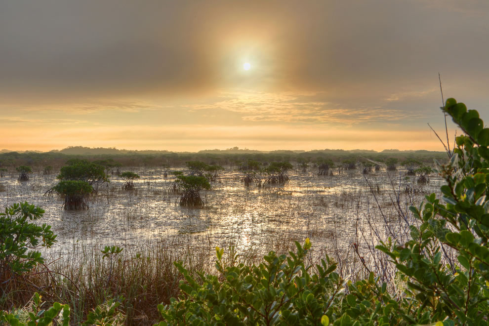 Mangroves-in-river-of-grass-Everglades-National-Park